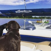 Boating_Dogs_Clermont_Florida.jpg