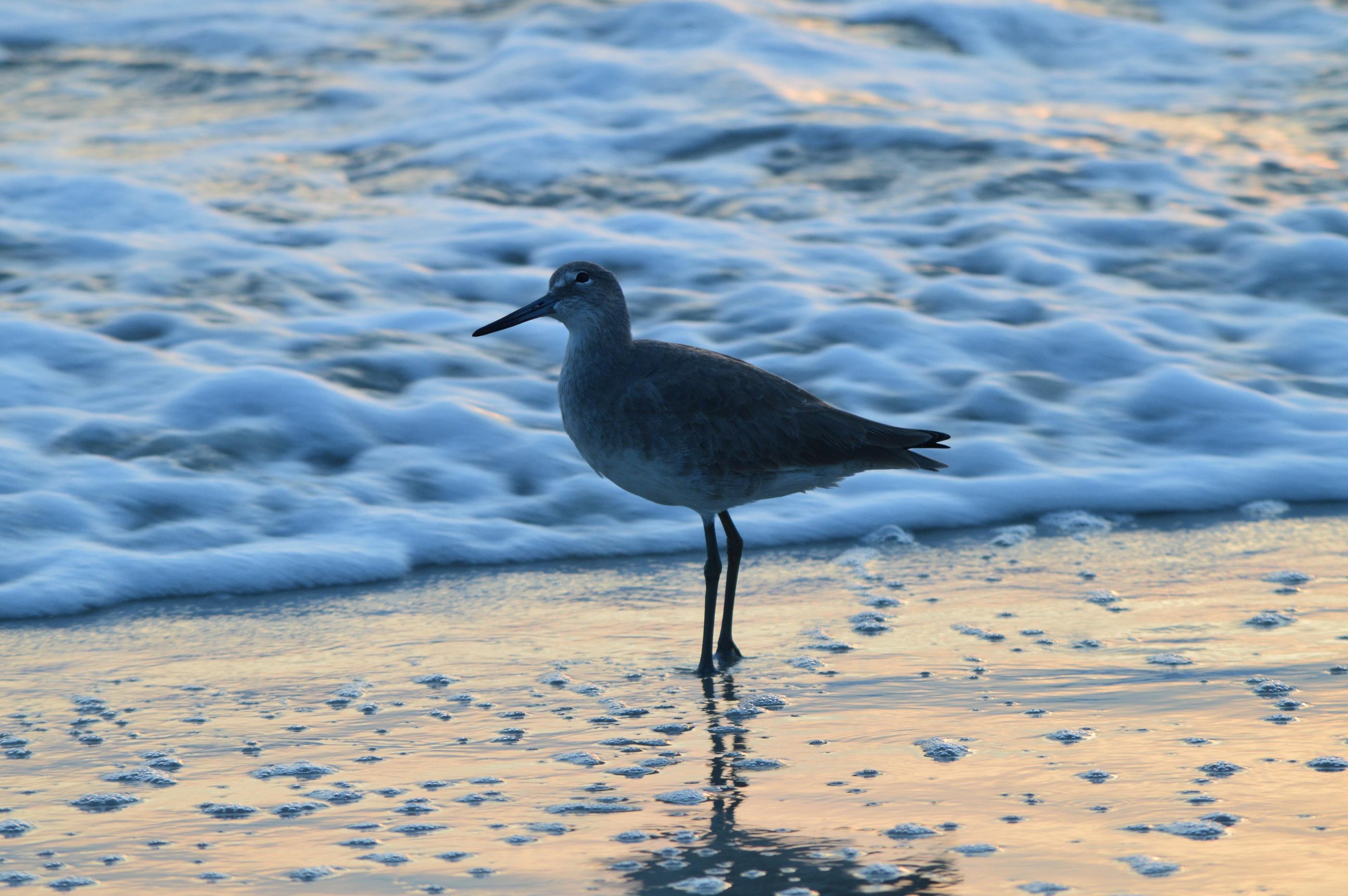 Ormond Beach Florida top (2)