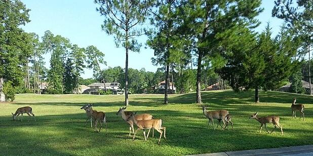 homes in central florida with deers in the lawn