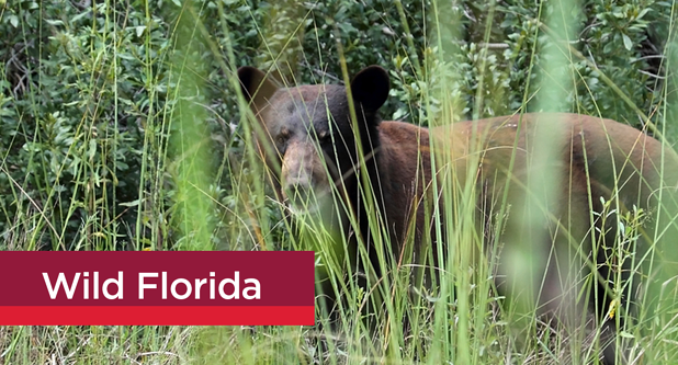 homes in central florida with bears