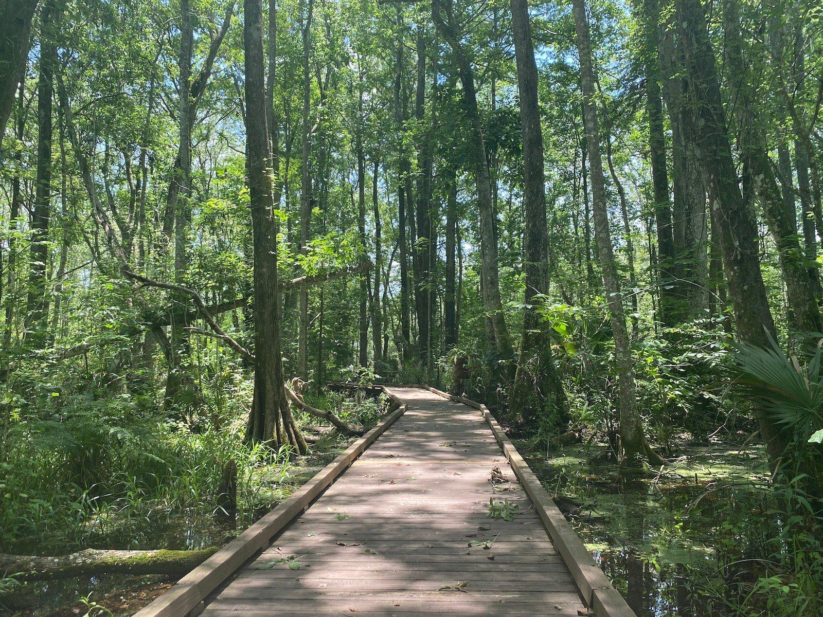 flat island preserve_marsh boardwalk